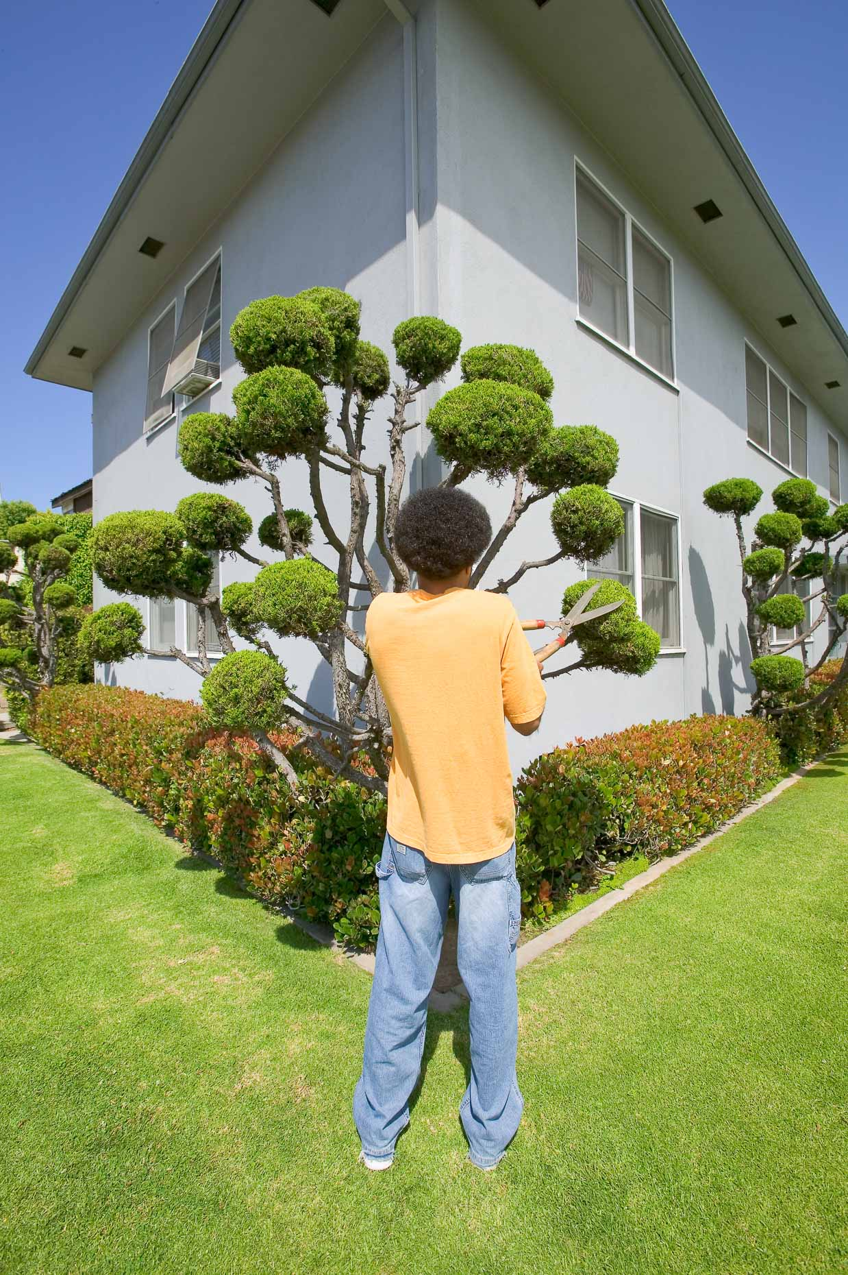 African American with afro trims topiary in shape of his hair. David Zaitz