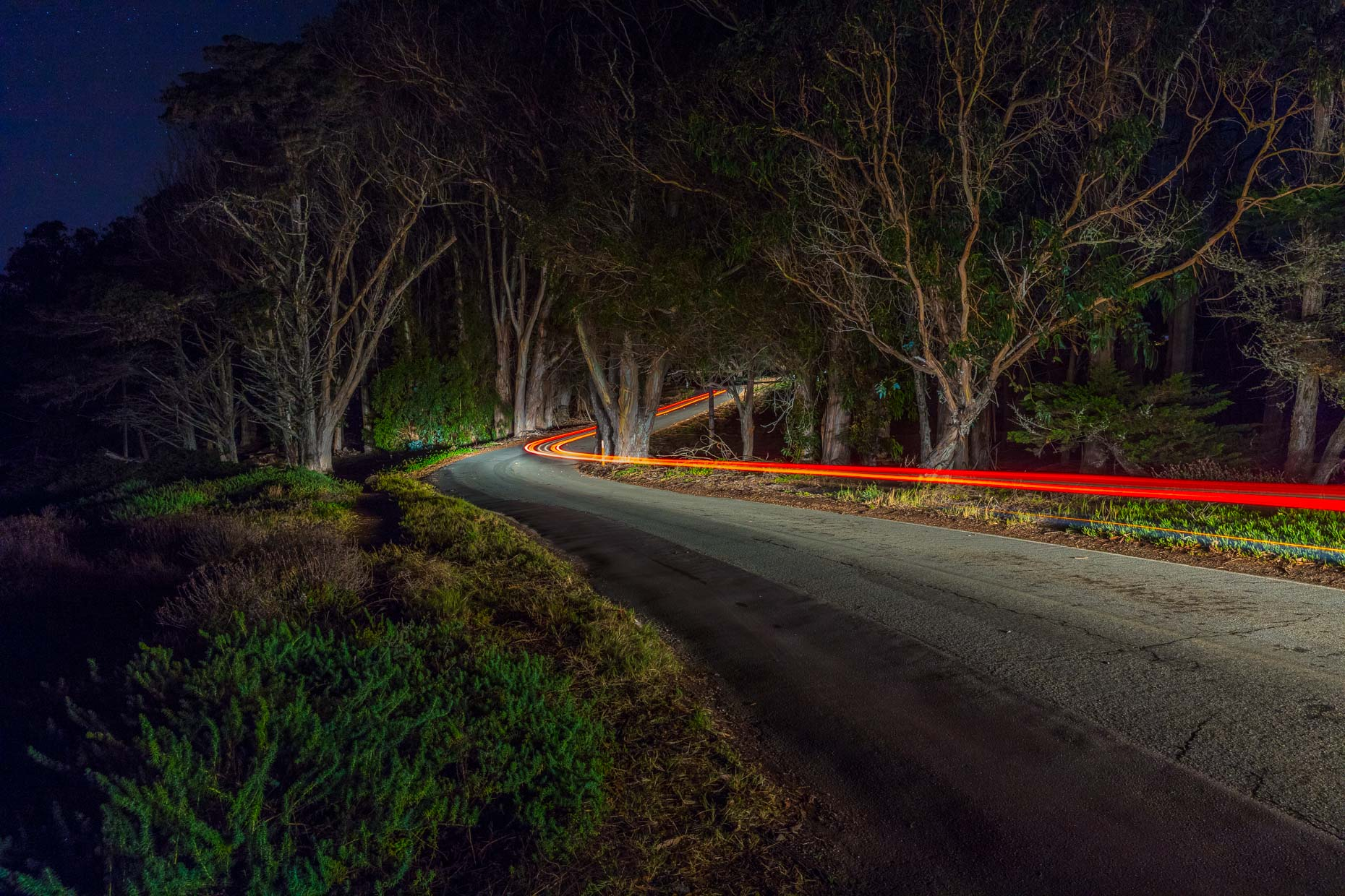 Streak of light from car driving on tree lined road at night in Morro Bay, California
