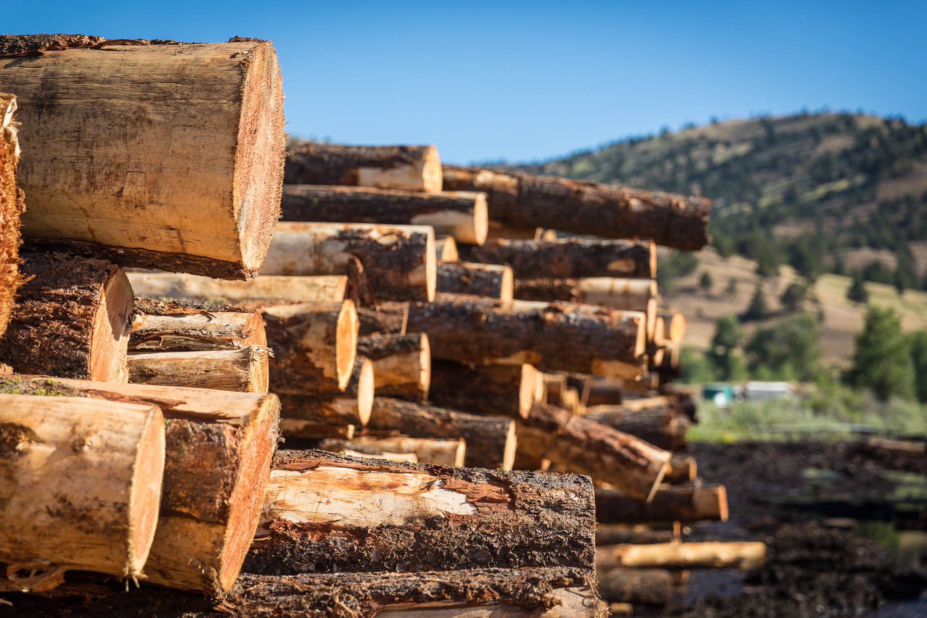 Detail of stack of logs waiting for processing at lumber mill, Malheur Lumber Company mill in John Day, Oregon by David Zaitz.