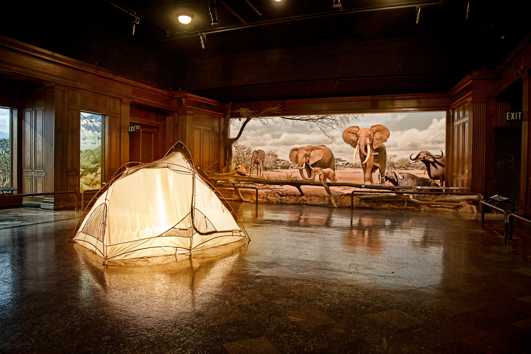 Camping tent in diorama room of Los Angeles County Nautral History Musuem.  Diorama includes elephants and giraffe.