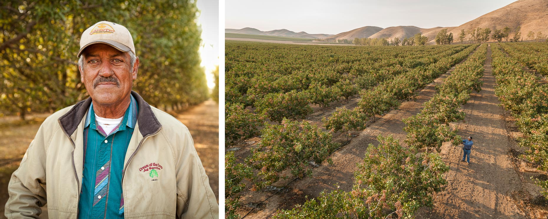 Portrait of man in orchard and overhead shot of man inspecting pistachio crop orchard by David Zaitz