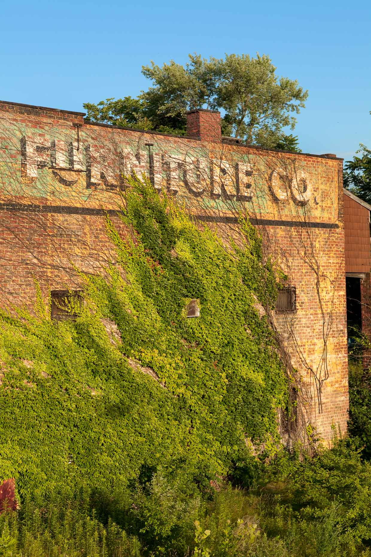 Green vines growing on side of brick building with FURNITURE CO. sign by David Zaitz